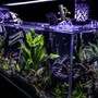 fish tank picture - Corner-view