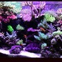 fish tank picture - 180 gallon sps/hardcoral reef tank. Modifed berlin setup, LR/LS.