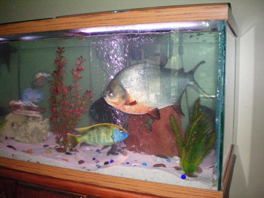 Remar417's Additional Tank Picture Photo (ID 28659) - Full Version | RateMyFishTank.com