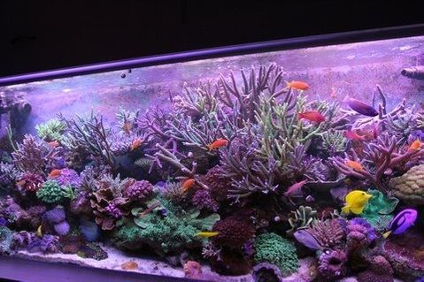 Rated #2: 220 Gallons Reef Tank - yoda's tank
