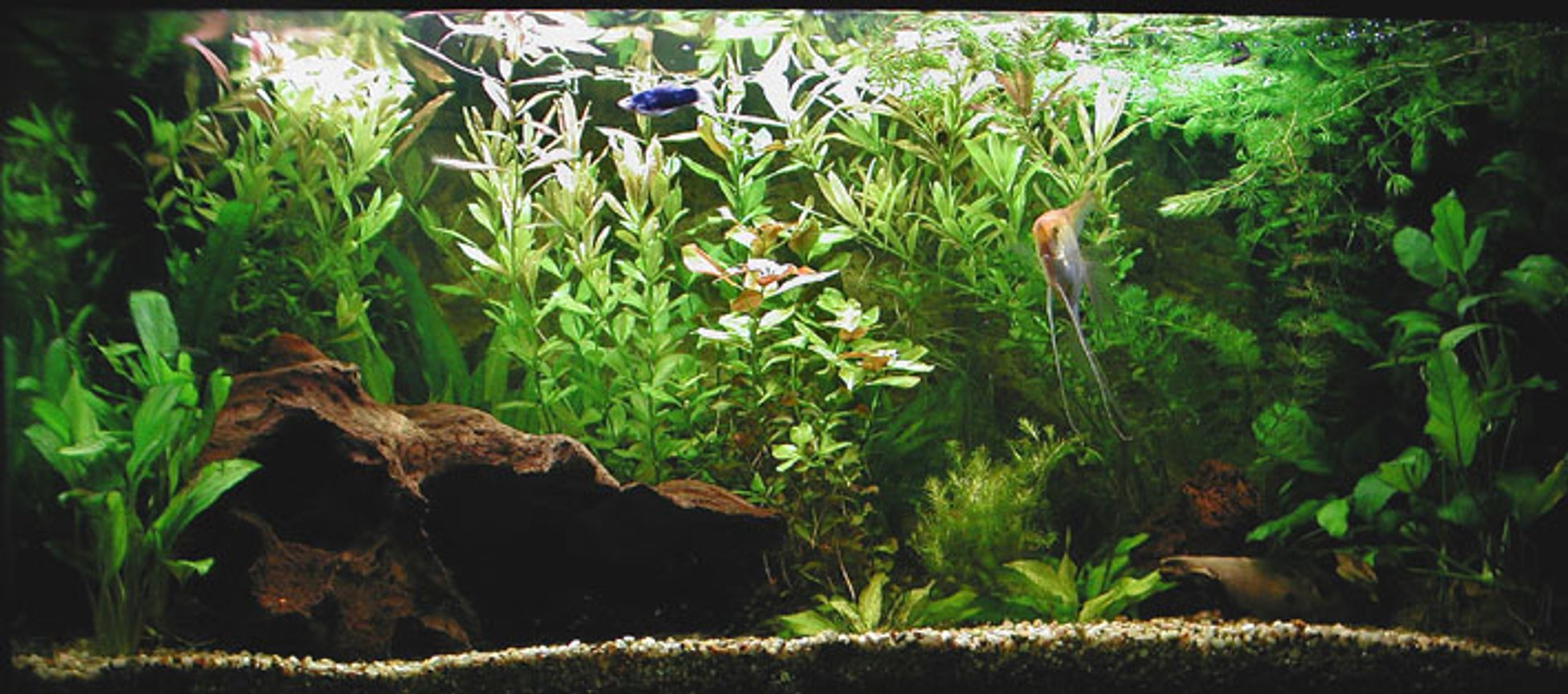 planted tank (mostly live plants and fish) - only 2 months in aqualand
