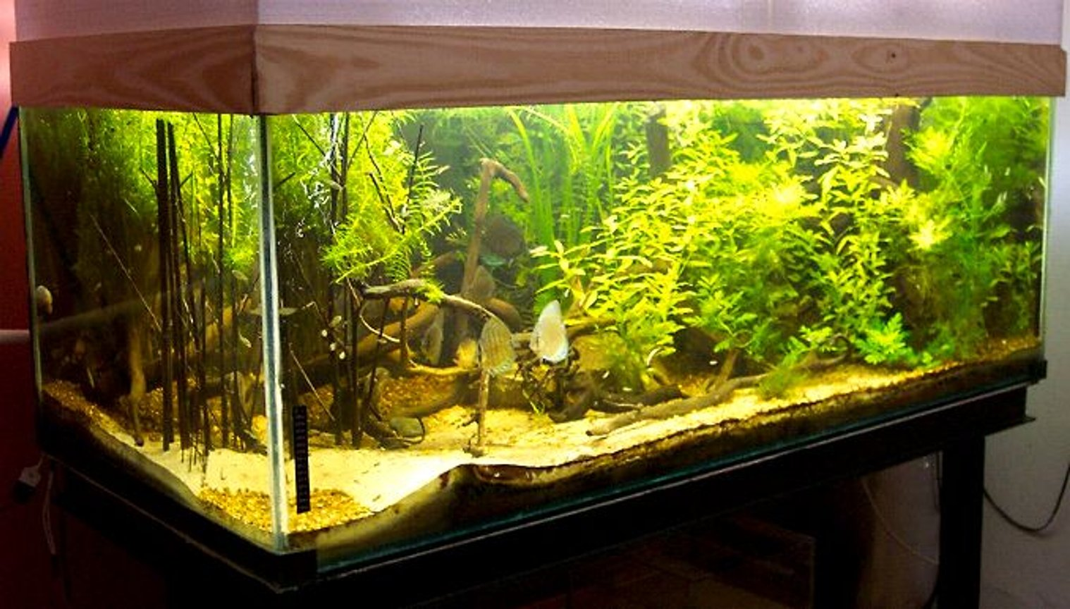 planted tank (mostly live plants and fish) - 800 lts (170 x 80 x 60)