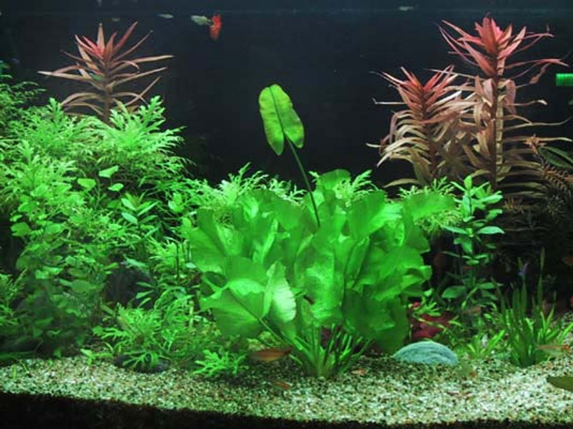 planted tank (mostly live plants and fish) - 4ftx2ftx2ft