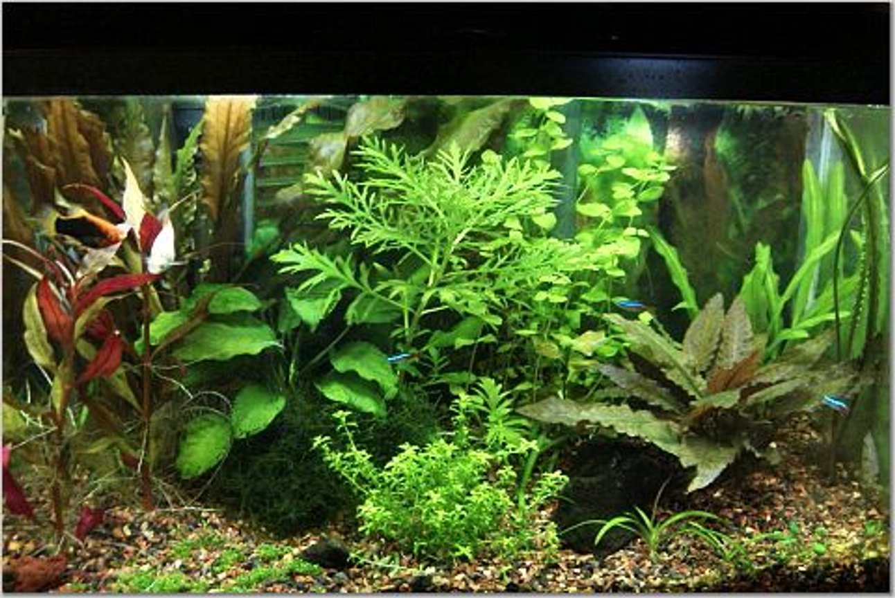 10 gallons planted tank (mostly live plants and fish) - I recently converted this tank from low to high lighting, and began adding co2. It's been about a month and a half and growth has been explosive. Still working on fertilizer balance but am becoming happy with the current look/set of plants.