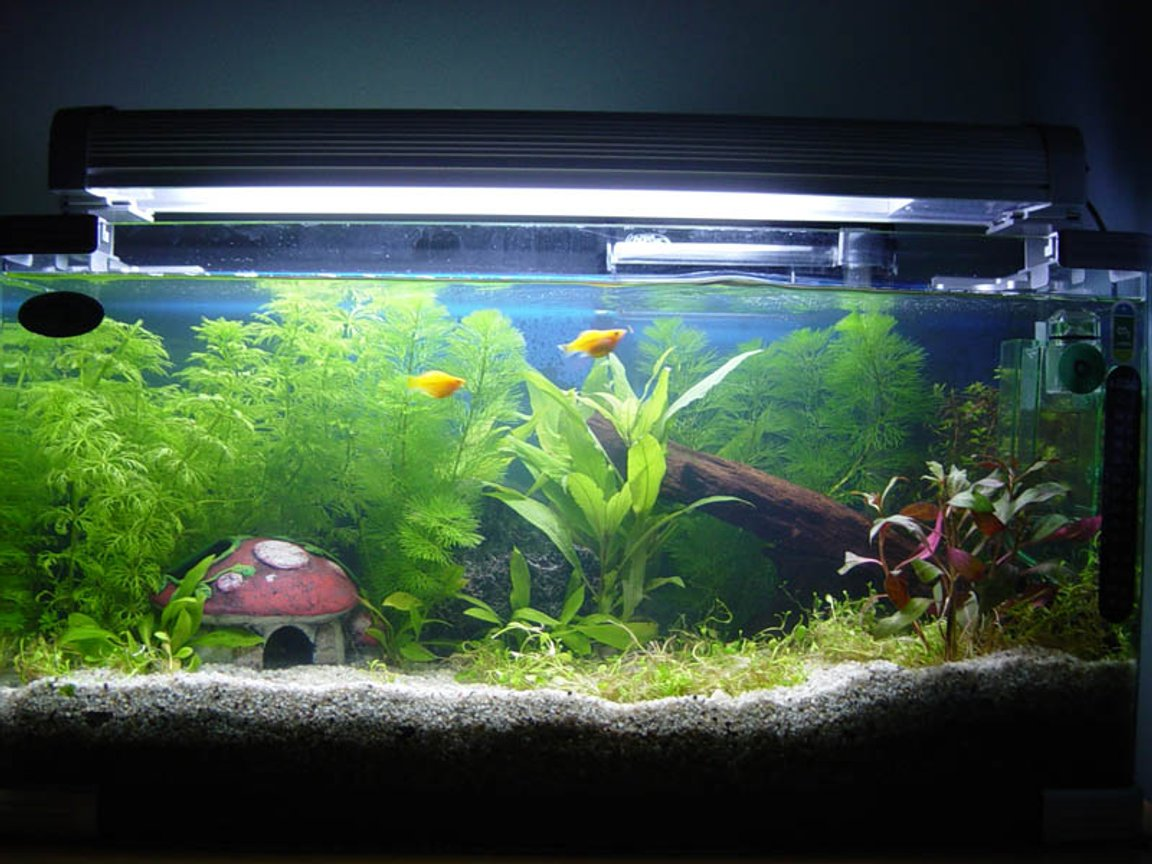 11 gallons planted tank (mostly live plants and fish) - Beginner in planted tank experience..