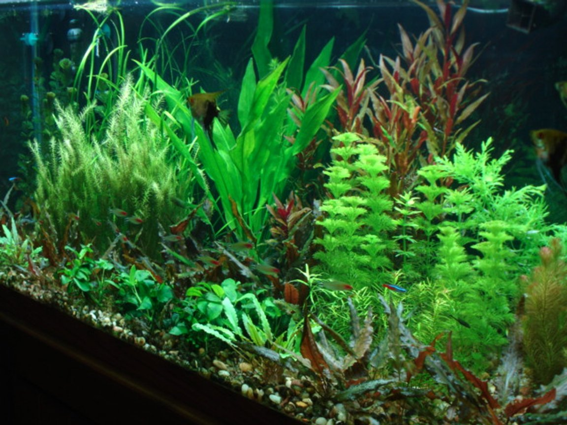 planted tank (mostly live plants and fish) - updated 75 gallon