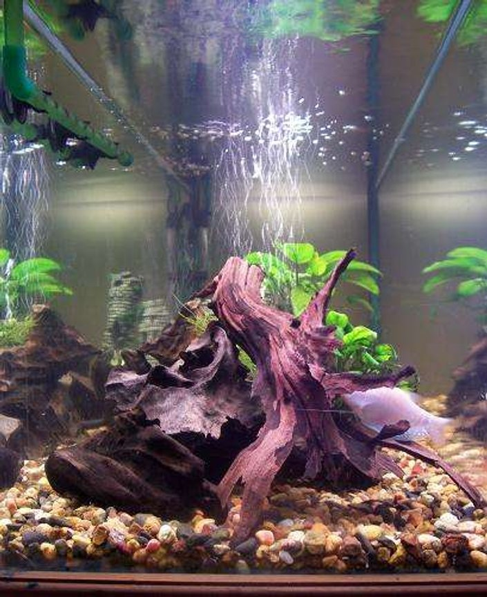 50 gallons planted tank (mostly live plants and fish) - side view of one of my tanks