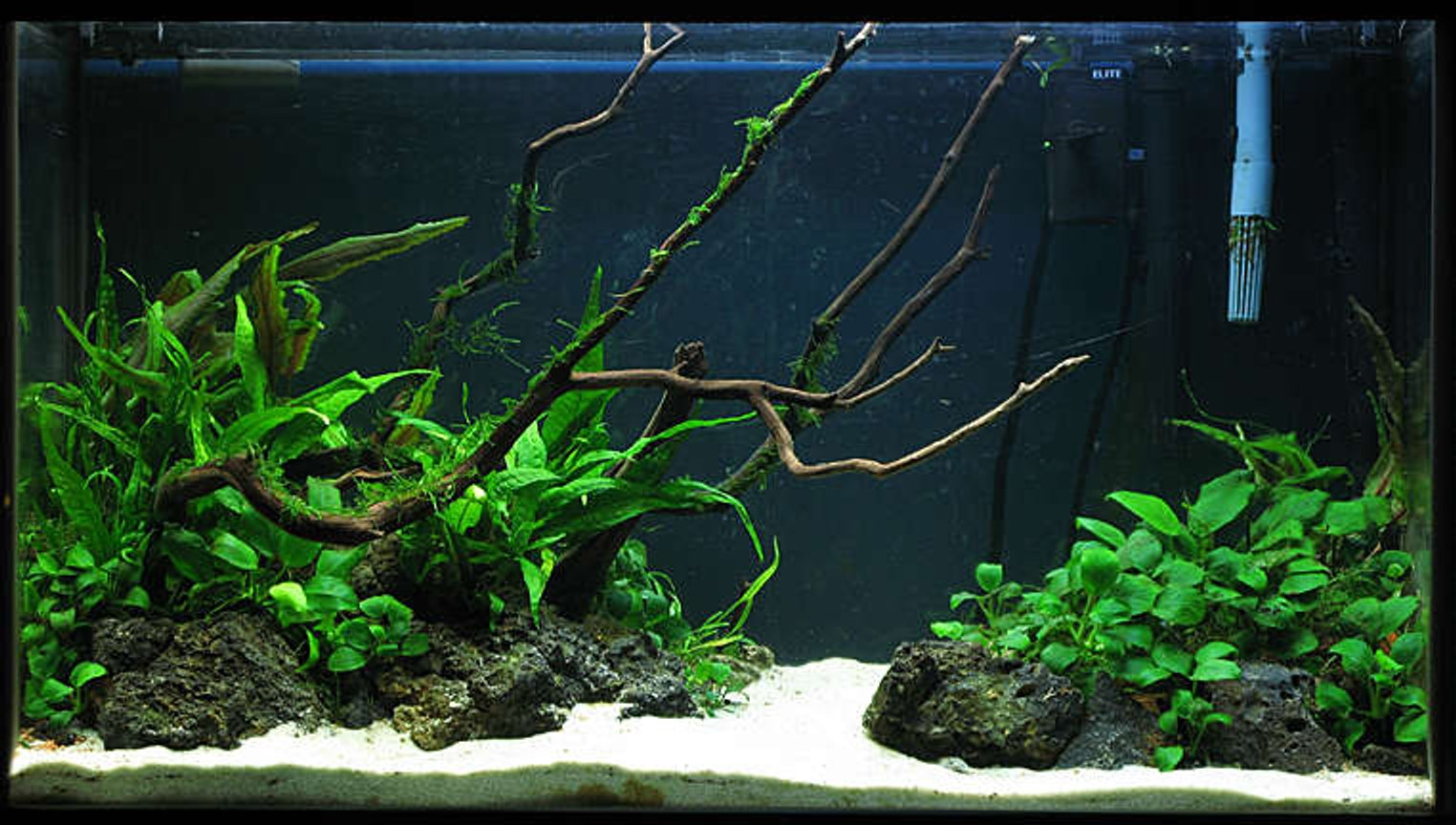 60 gallons planted tank (mostly live plants and fish) - 29g Low light Tank Java fern, Crypts, Anubias, Moss, ... 3 Apistogramma bitaeniata 1 otto