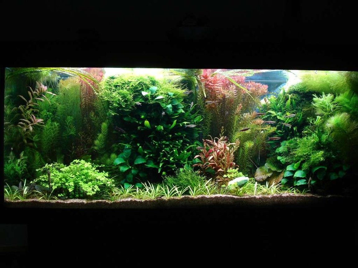 53 gallons planted tank (mostly live plants and fish) - 240L 120 x 40 x 50, Fluorescent lightning T8: 4 x 38W Filtration: Eheim 2236 600l/h & Juwel Compact 1000l/h, CO2 addition, fertilisation with PMDD or Profito twice a week, daily Easycarbo 5ml & 50-60% water change weekly
