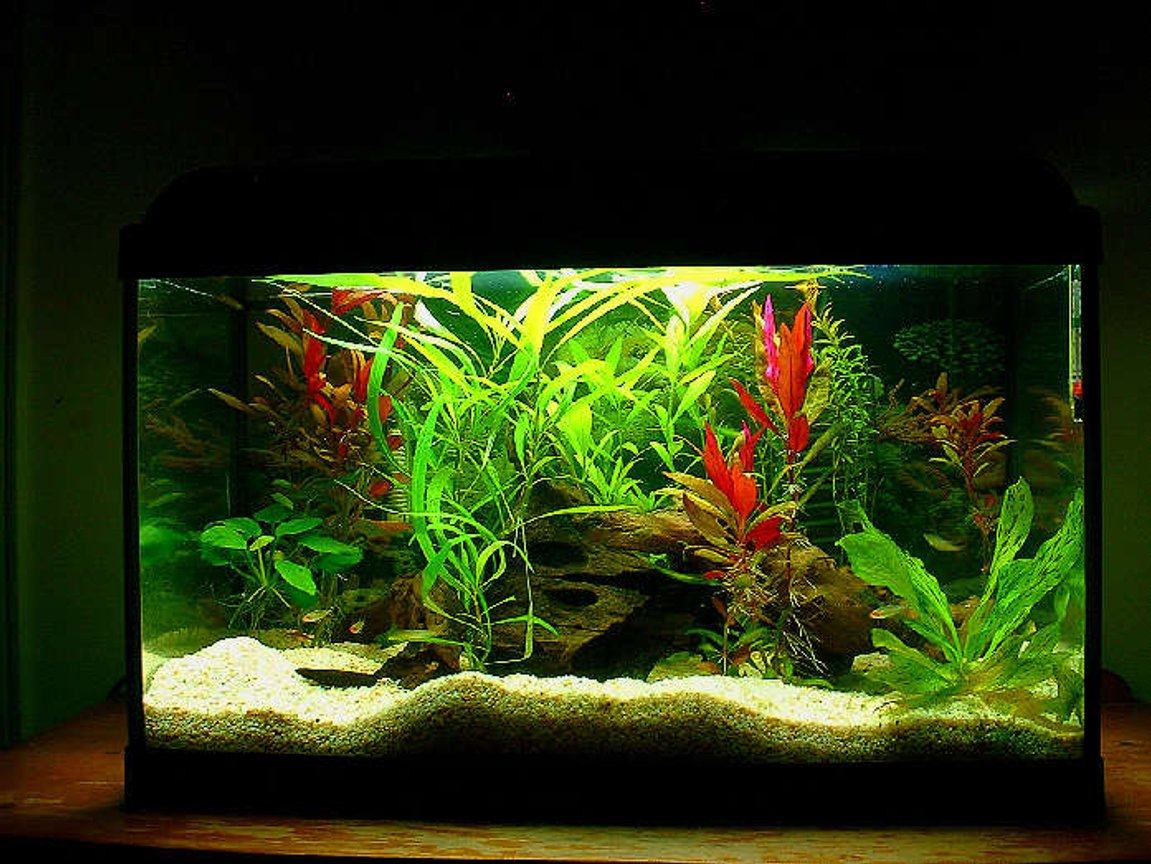 20 gallons planted tank (mostly live plants and fish) - 24-18-12 standard - life glo 2 15w lamp - power 20 filter no carbon double sponge and bio medium - keep carbon out of your tank - diy - never use fast rising yeast your ph will change a little too quickily