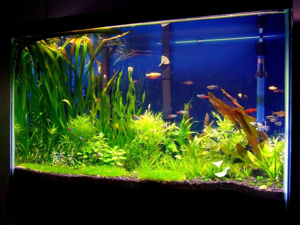 29 gallons planted tank (mostly live plants and fish) - This is my 29 gallon planted tank. My new hobby after keeping a 75 gallong African Cichlid tank. Let me know what you think about it. The tank has been up for 2 months now. I have a co2 injection system and I also fertilize my tank.
