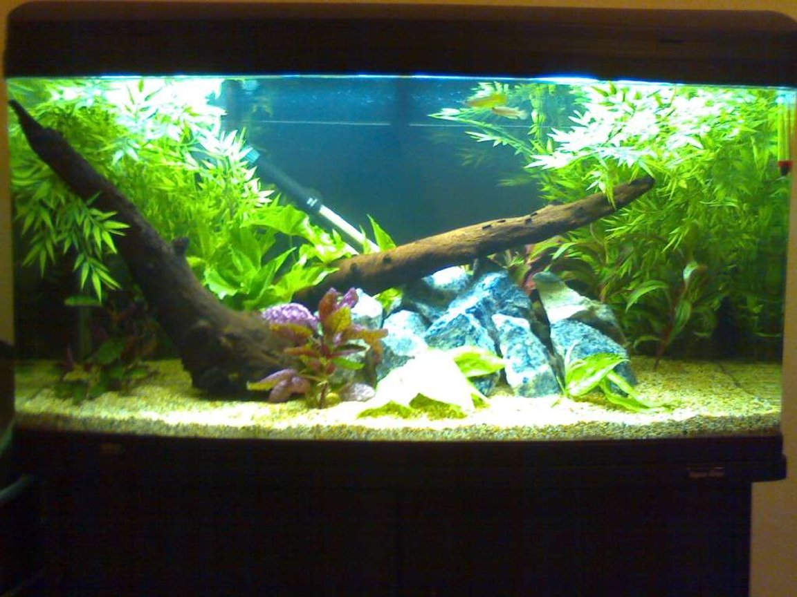 55 gallons planted tank (mostly live plants and fish) - New tank