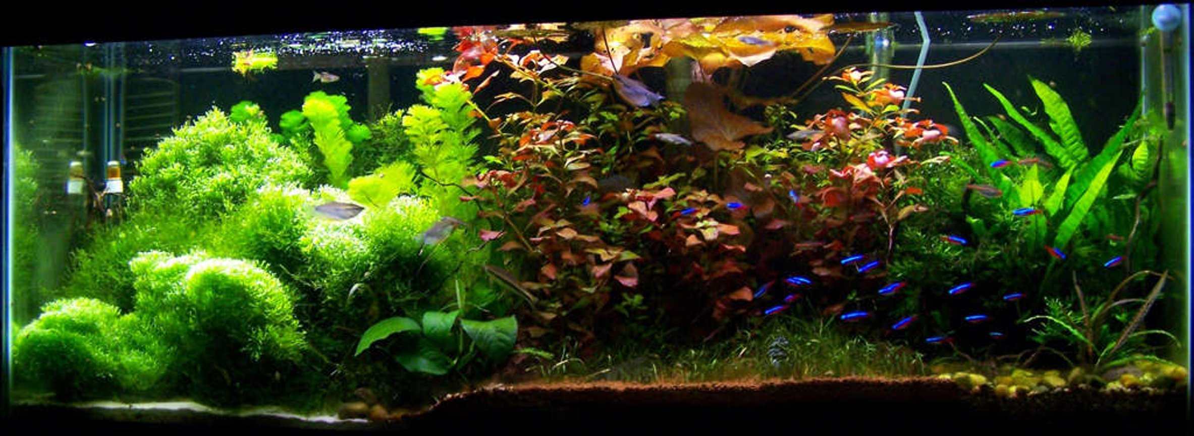 50 gallons planted tank (mostly live plants and fish) - 4 Foot 50 Gallon Tropical community tank.