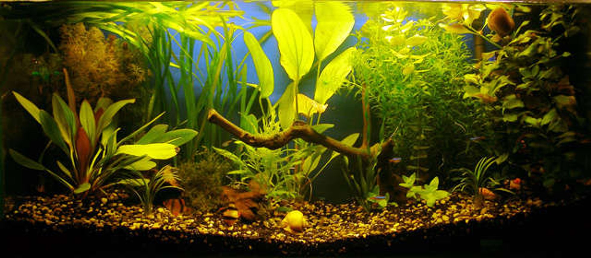18 gallons planted tank (mostly live plants and fish) - 18 gallons community aquarium 2 x 18w philips 830 filter 600l/h