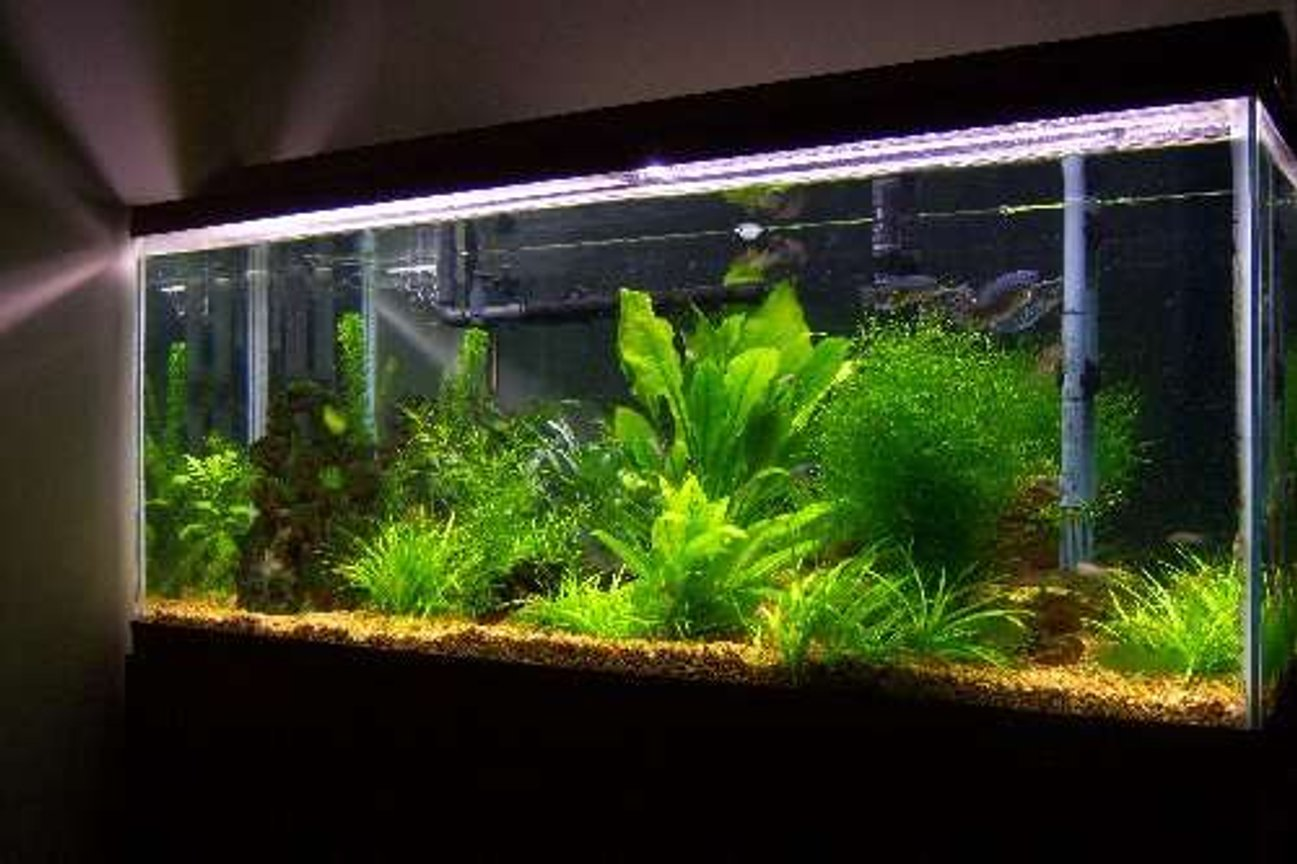 55 gallons planted tank (mostly live plants and fish) - One of my tanks.