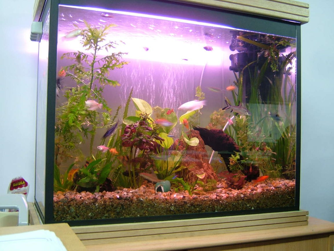 50 gallons planted tank (mostly live plants and fish) - 4 days back need more plants.