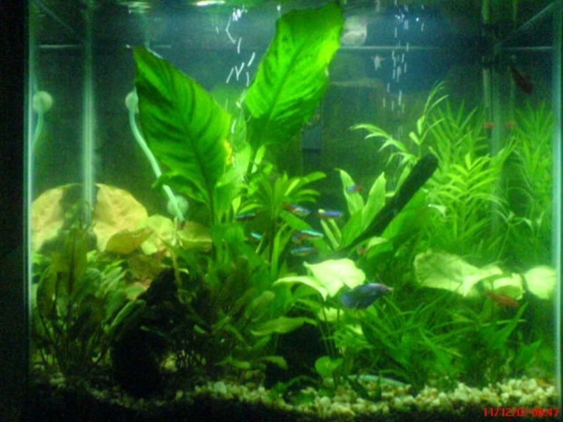 20 gallons planted tank (mostly live plants and fish) - My 20 gal World