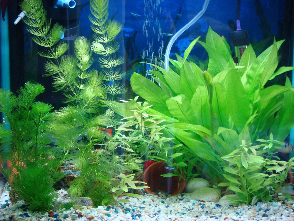 12 gallons planted tank (mostly live plants and fish) - my tank