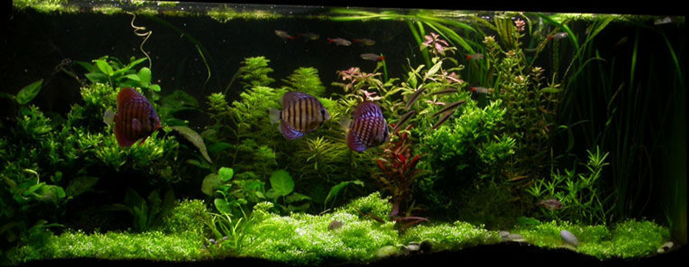 100 gallons planted tank (mostly live plants and fish) - ssssss