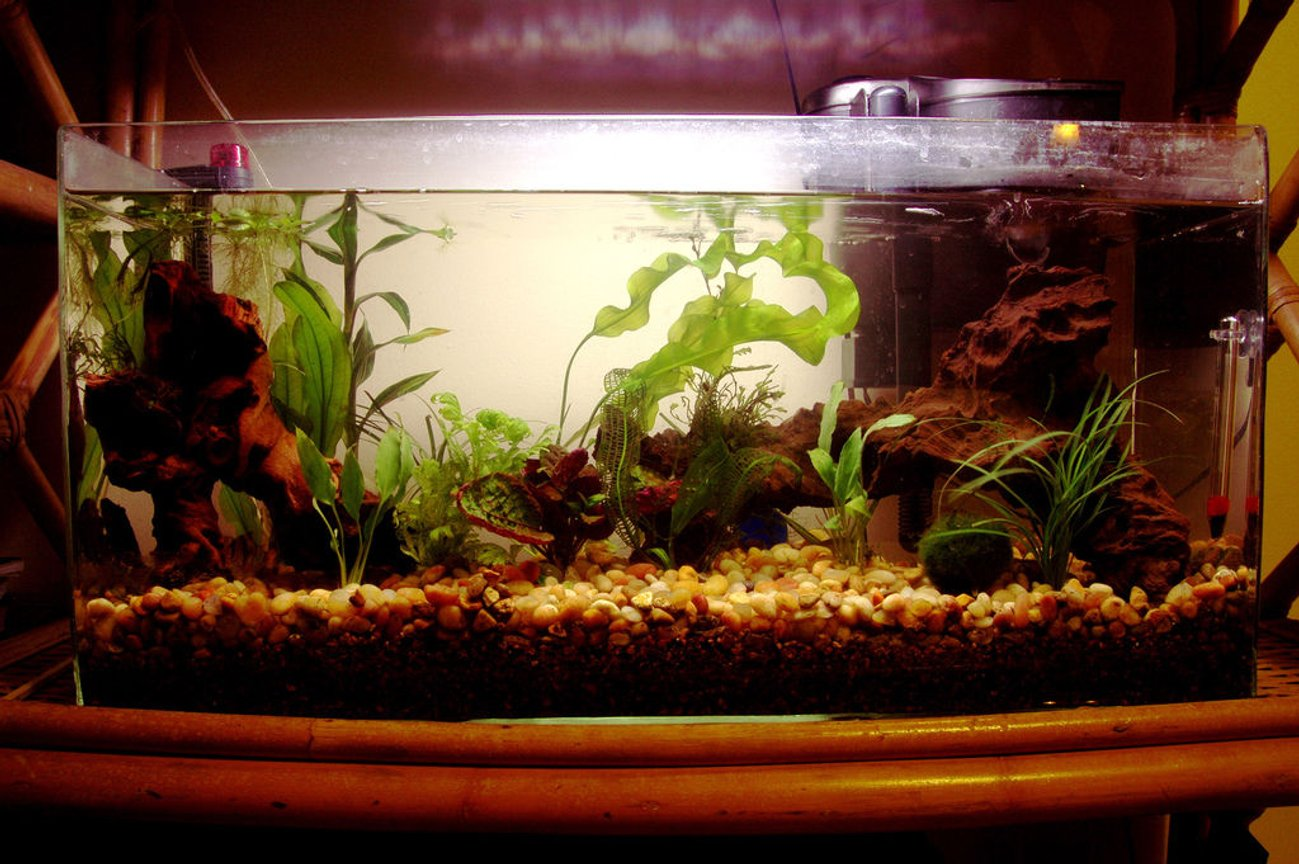 13 gallons planted tank (mostly live plants and fish) - Many new plants. No CO2.