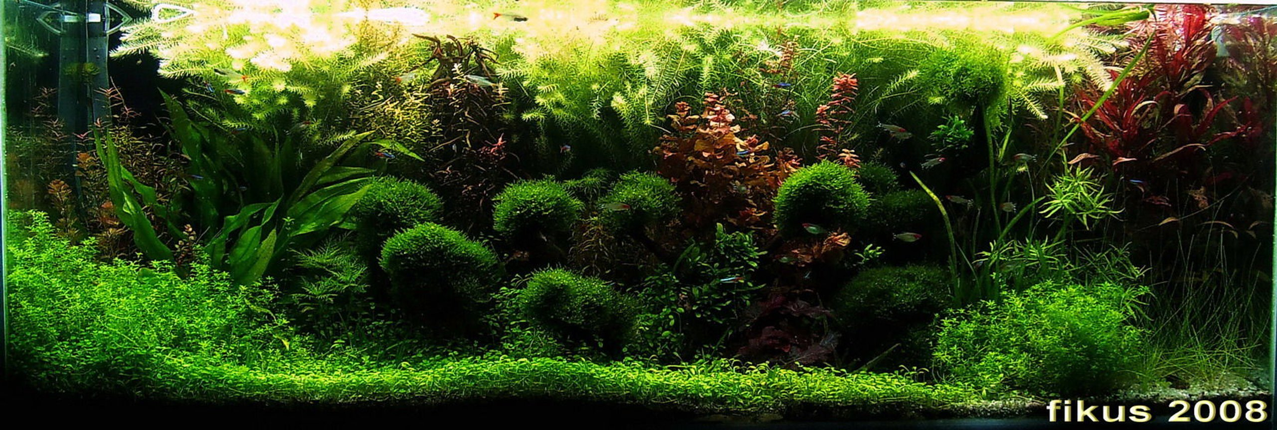 130 gallons planted tank (mostly live plants and fish) - 130GAL planted tank