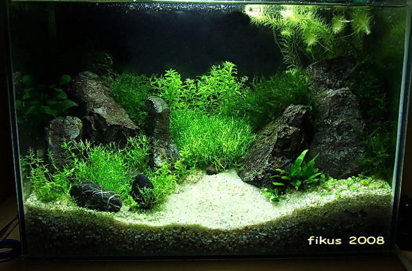 130 gallons planted tank (mostly live plants and fish) - 13l planted