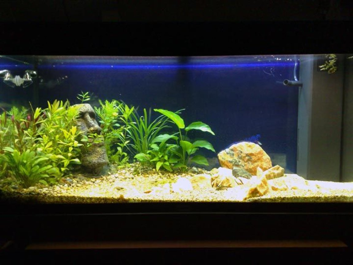 48 gallons planted tank (mostly live plants and fish) - one old photo, now it looks better, pic is coming.