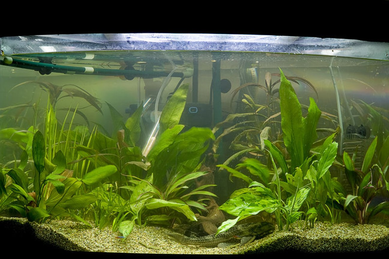 47 gallons planted tank (mostly live plants and fish) - my second attempt at a planted tank, this time with a little more success.