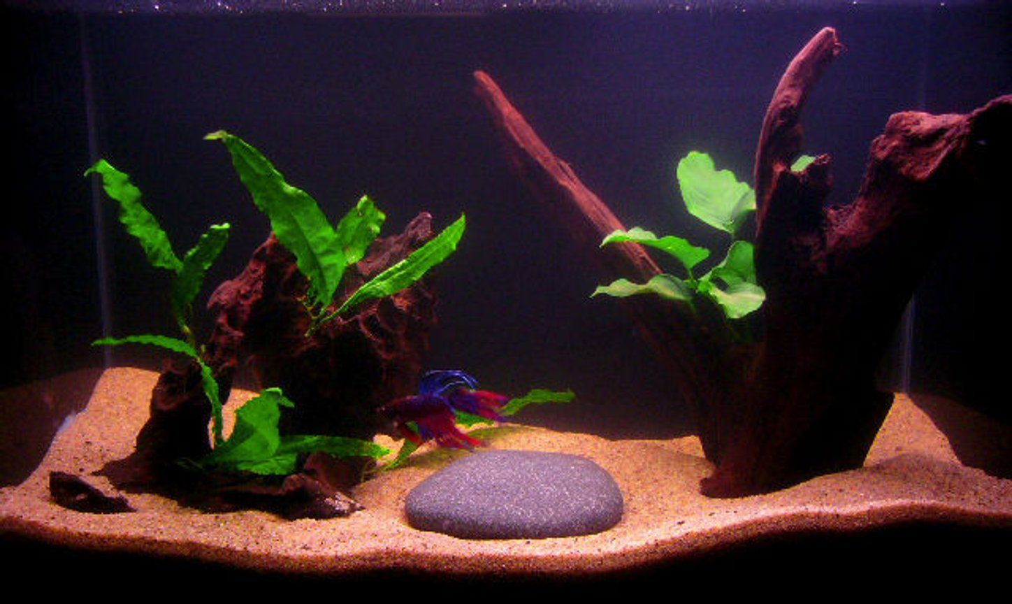10 gallons planted tank (mostly live plants and fish) - 10 Gallon, 1 male Crowntail Betta, 1 Anubias Nana, 1 Java Fern