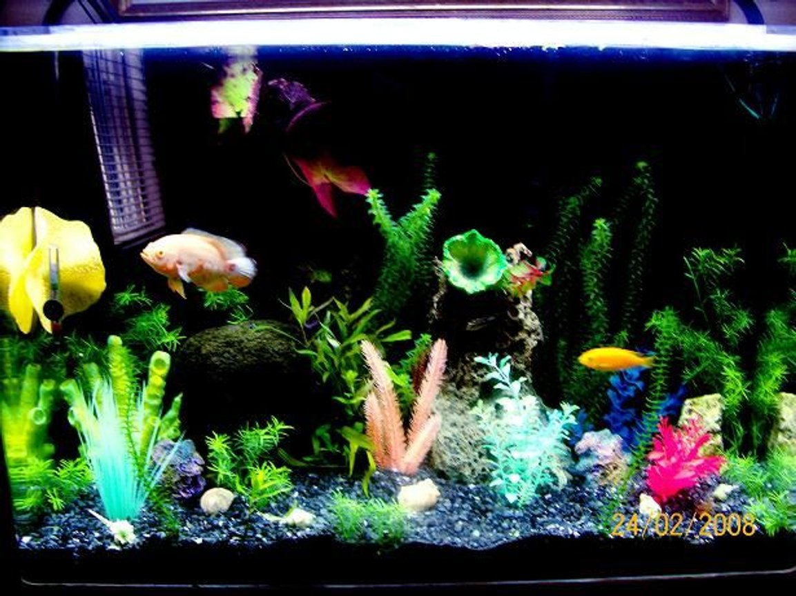 26 gallons planted tank (mostly live plants and fish) - GARDEN OF EDEN
