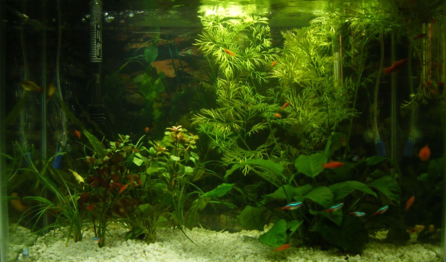 20 gallons planted tank (mostly live plants and fish) - 20 Gallon tank (IF YOU HAVE A SALTWATER TANK YOUR TANK PROBABLY LOOKS BETTER THAN MINE)