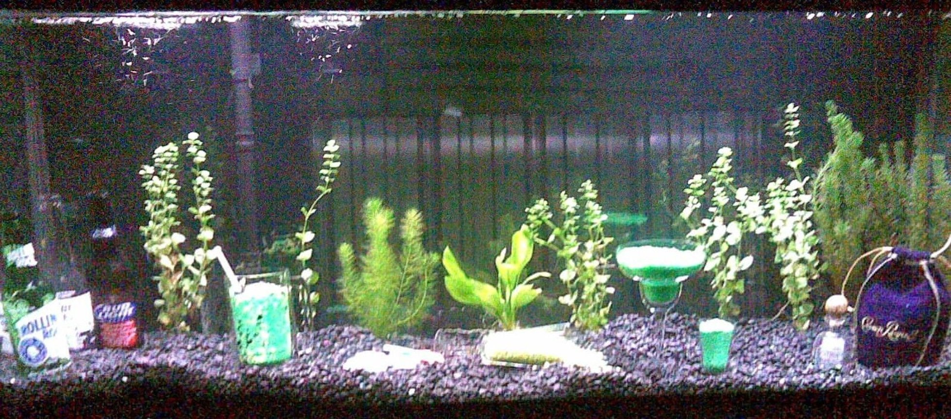 55 gallons planted tank (mostly live plants and fish) - (Picture was taken with a cell phone so please excuse the fuzzy quality) This fish tank is my 55 gallon bar. This fish tank is part 2 of a 2 part wet bar in the downstairs of my house. Atop this fish tank is counter top and behind is a full bar. The insides of this fish tank include fish, plants, beer wine and liquor bottles. There are mixed drinks (gravel) and even a spilled cocktail. NOT PICTURED HERE: there is a tap built into the top of the bar and a glass that has been perm. glued down with a constant flow of pond water pumped through the tap and into the glass that then falls back through the small hole back into the tank. One of the most eye catching tanks I've ever owned because of the setup and environment around the tank as well as inside the tank.