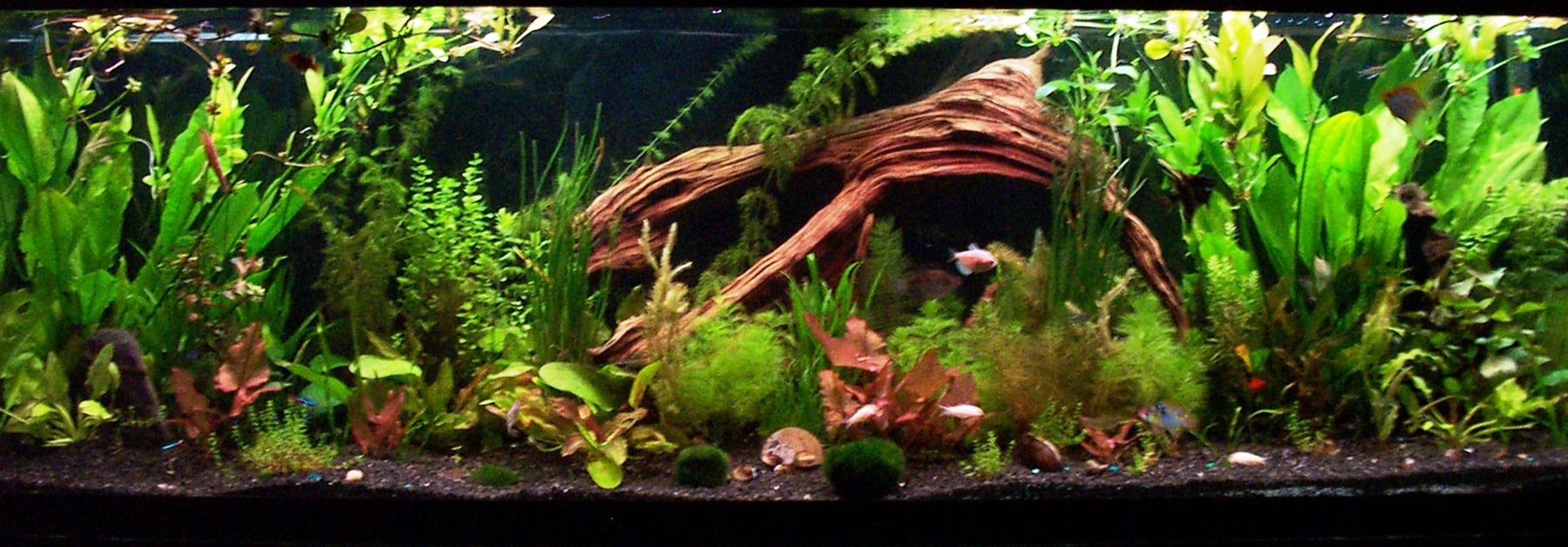 125 gallons planted tank (mostly live plants and fish) - the final product, i am 100% satisfied with the amount of plants i now have as well as quite happy with the lay out and the growth at the moment, please feel free to comment, and or leave any suggestions. Brandon