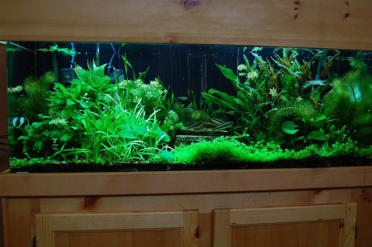 60 gallons planted tank (mostly live plants and fish) - 60 Gal. Planted tank with pressurized CO2