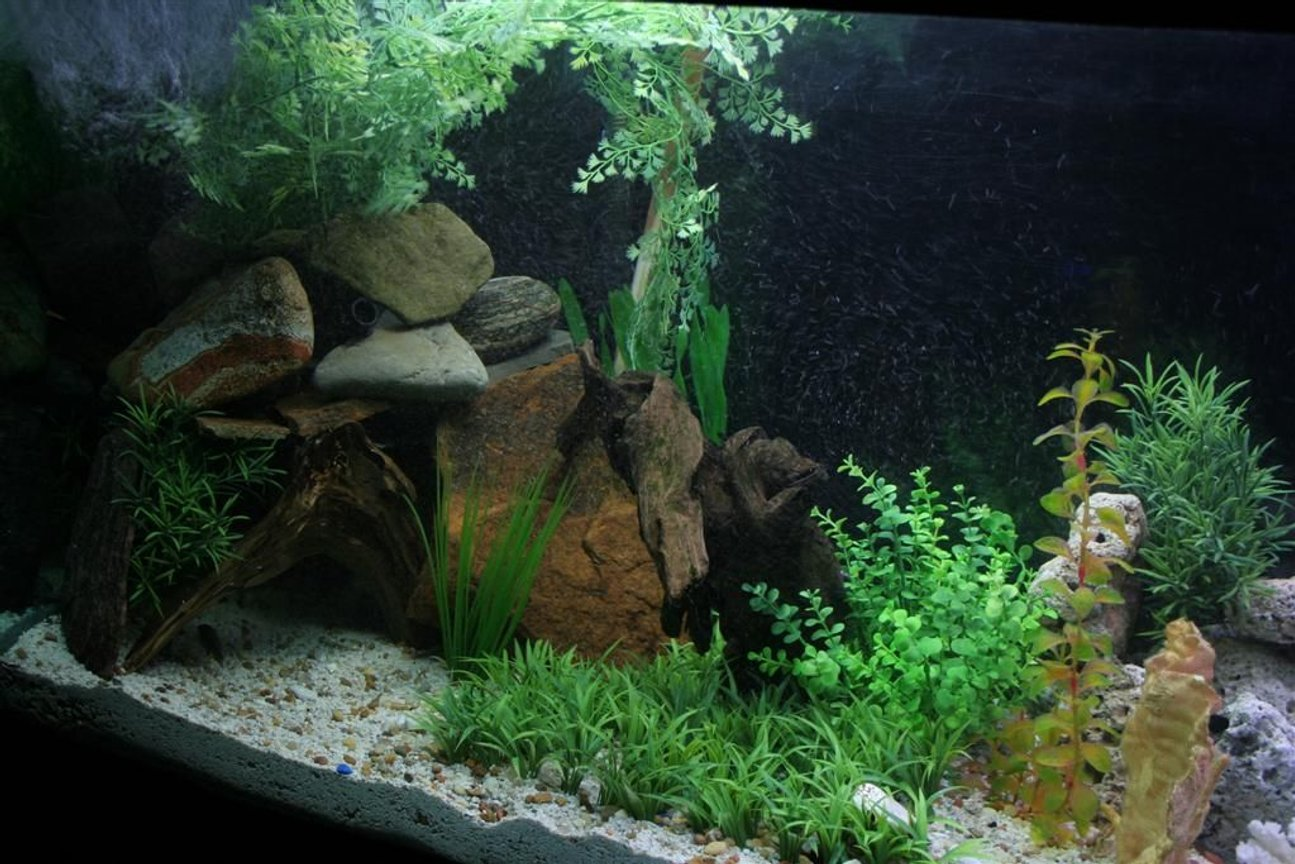 110 gallons planted tank (mostly live plants and fish) - big cave for my big jack