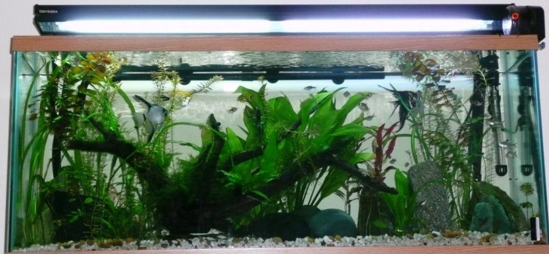 65 gallons planted tank (mostly live plants and fish) - Sort of an amazon based theme