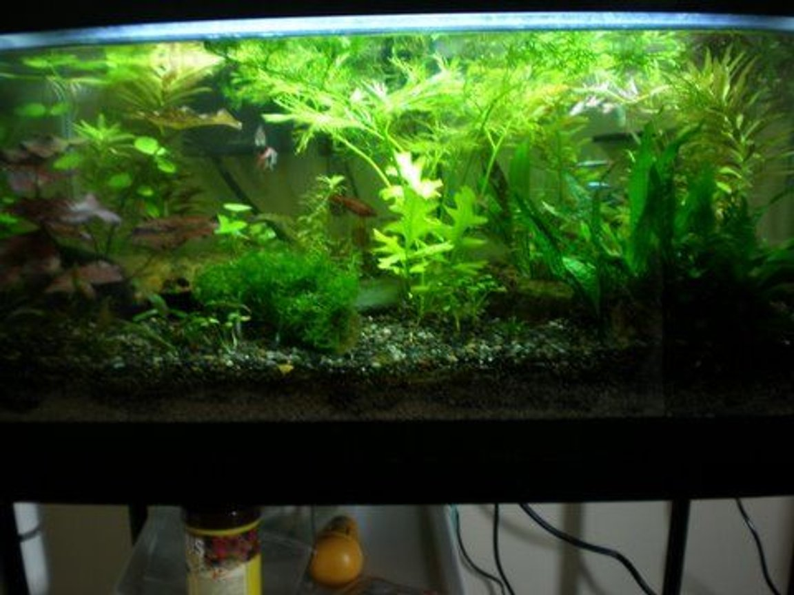 15 gallons planted tank (mostly live plants and fish) - Here's my 15 gallon tank - enjoy!