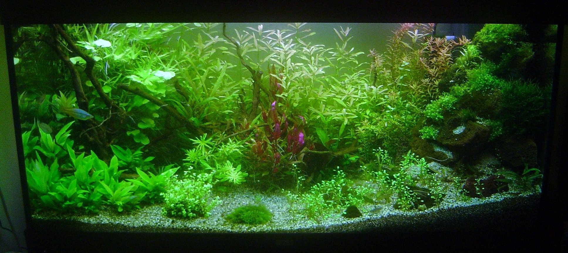 300 gallons planted tank (mostly live plants and fish) - my new rio 300 planted set up.