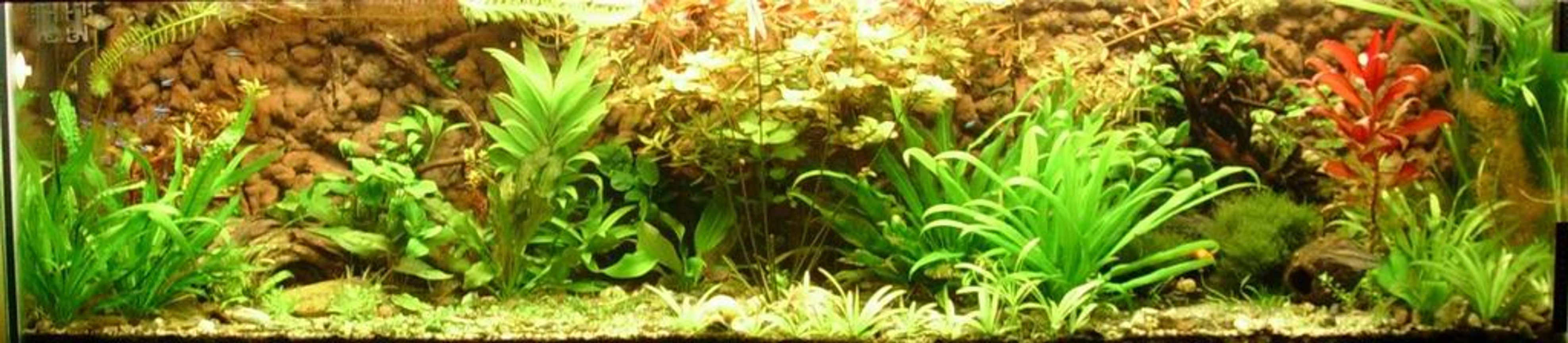 118 gallons planted tank (mostly live plants and fish) - My tank after 4 moths.
