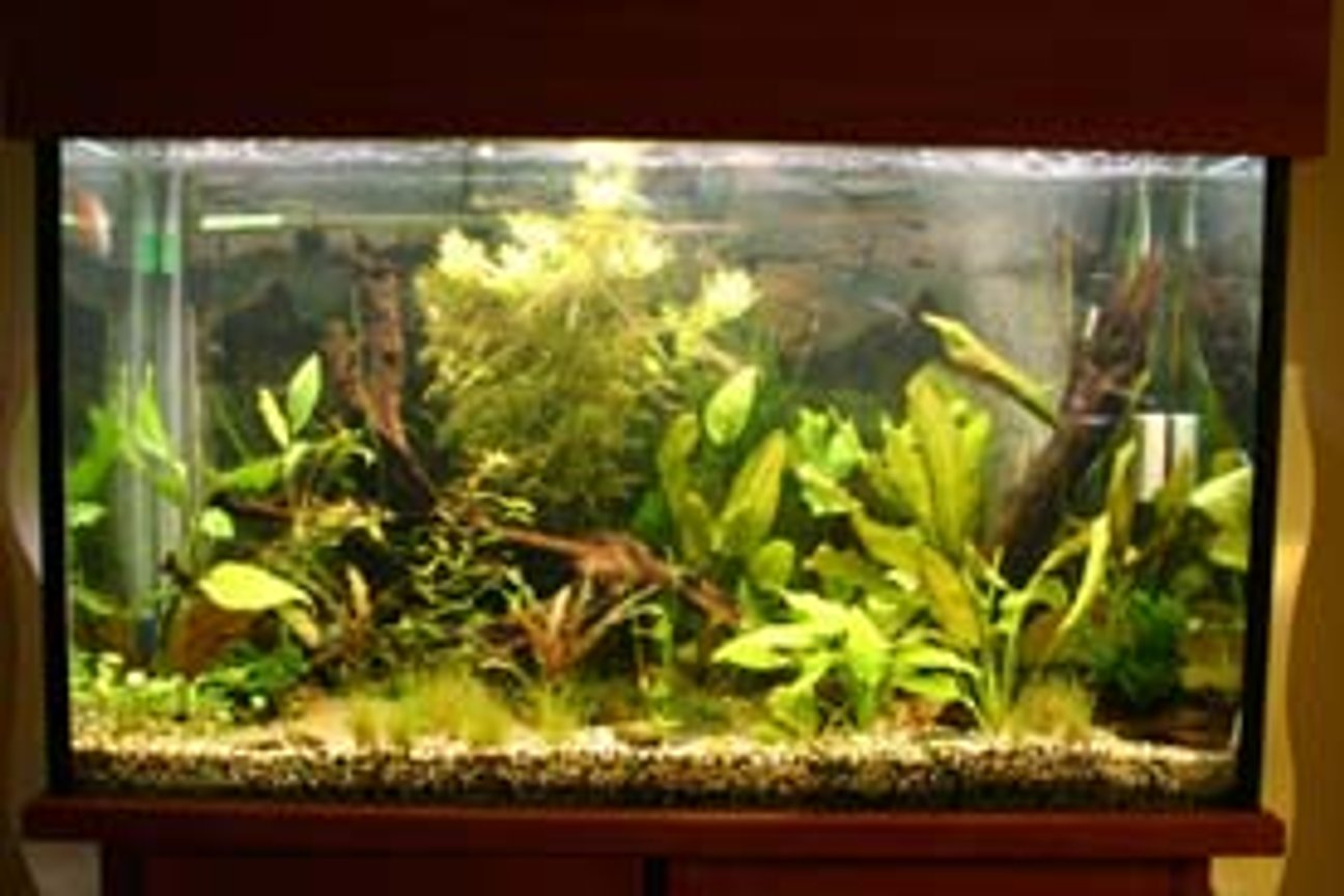 80 gallons planted tank (mostly live plants and fish) - x