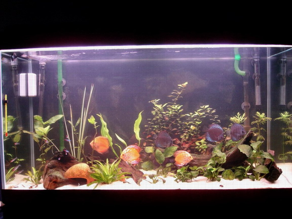 63 gallons planted tank (mostly live plants and fish) - Make your own world real :)