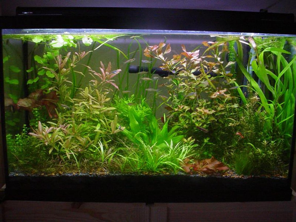 29 gallons planted tank (mostly live plants and fish) - Eclectic and wild. Photo taken February 19, 2006