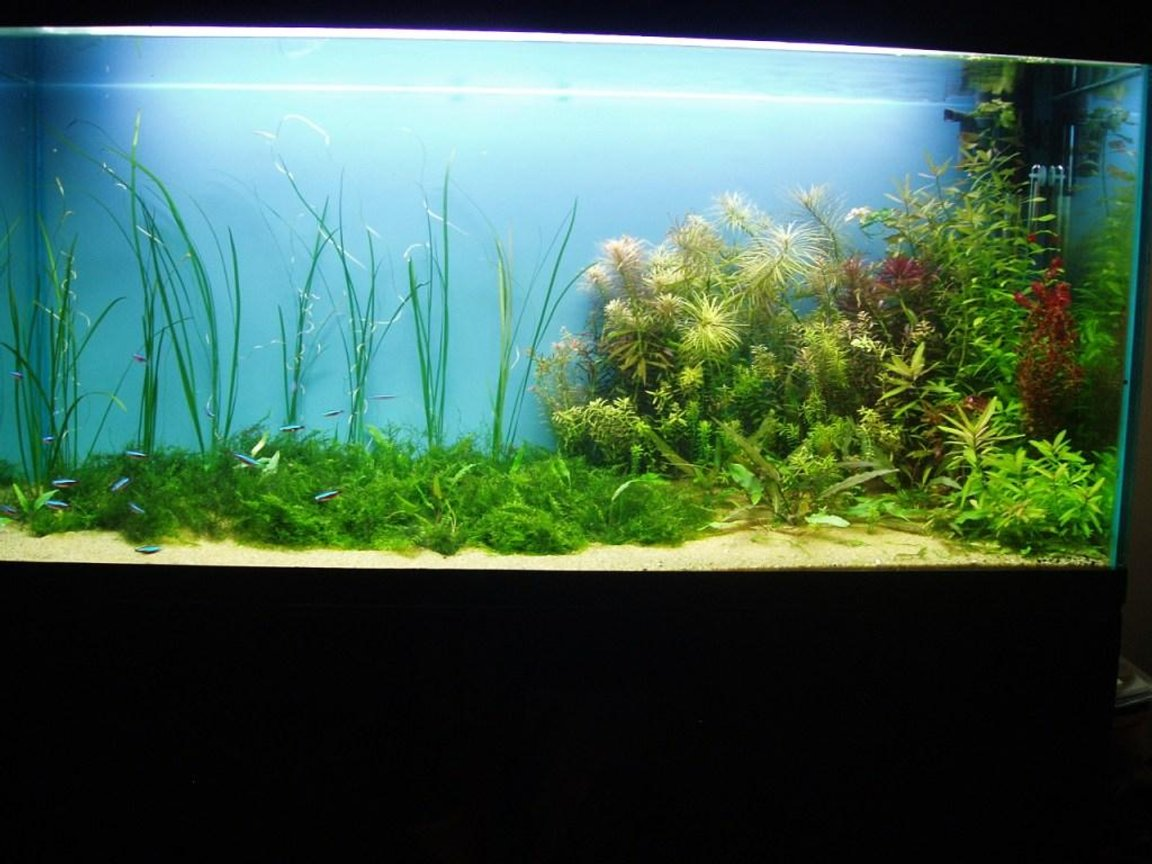 75 gallons planted tank (mostly live plants and fish) - my old fish tank