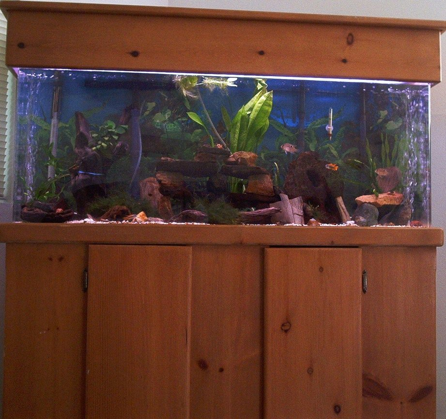 55 gallons planted tank (mostly live plants and fish) - full front of tank