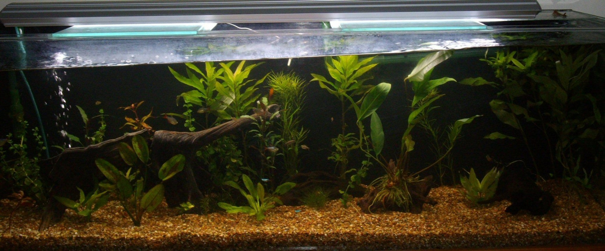 70 gallons planted tank (mostly live plants and fish) - a bit of a tilt..