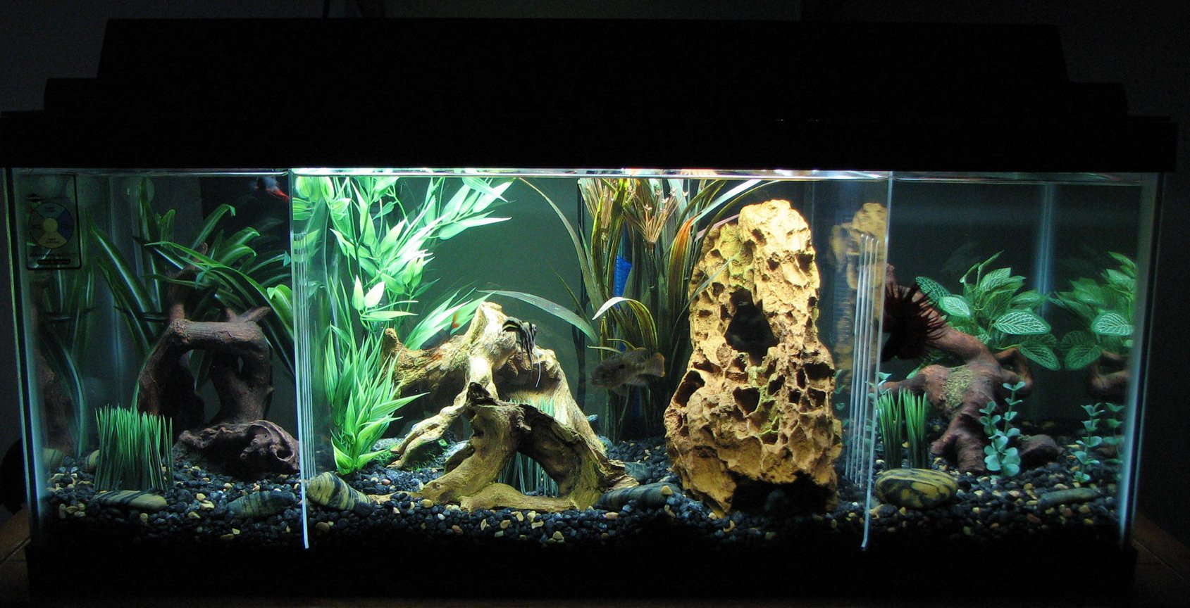 20 gallons planted tank (mostly live plants and fish) - 20-Gal. Long Semi-Aggressive Freshwater Tank