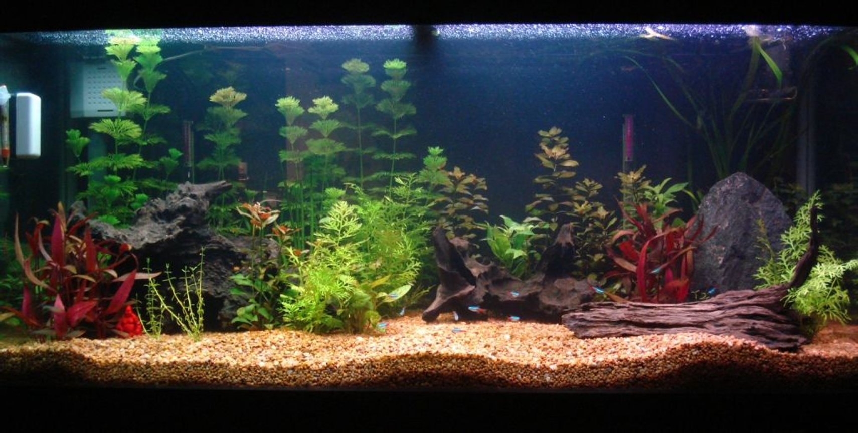 62 gallons planted tank (mostly live plants and fish) - my 285 litre aquarium