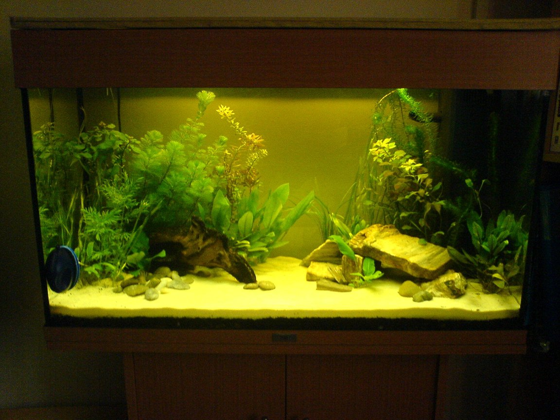 33 gallons planted tank (mostly live plants and fish) - Newly Planted Rio 125