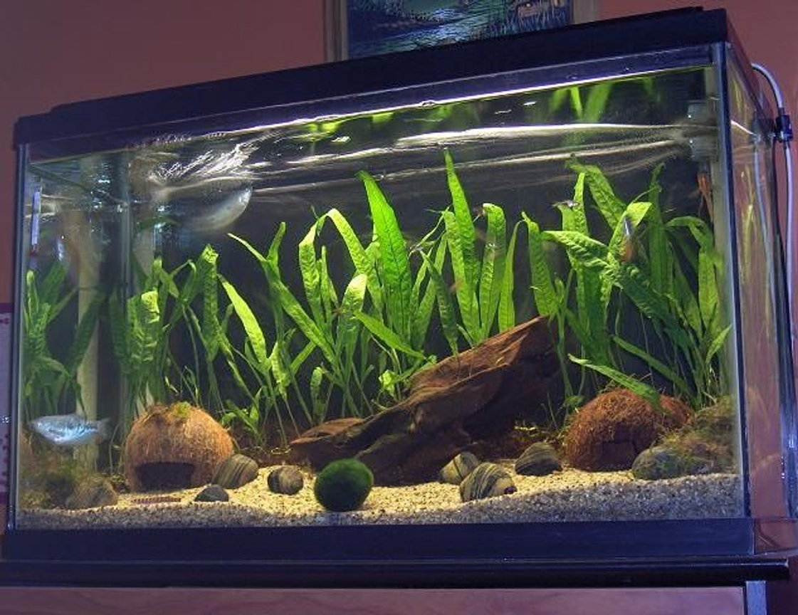 29 gallons planted tank (mostly live plants and fish)