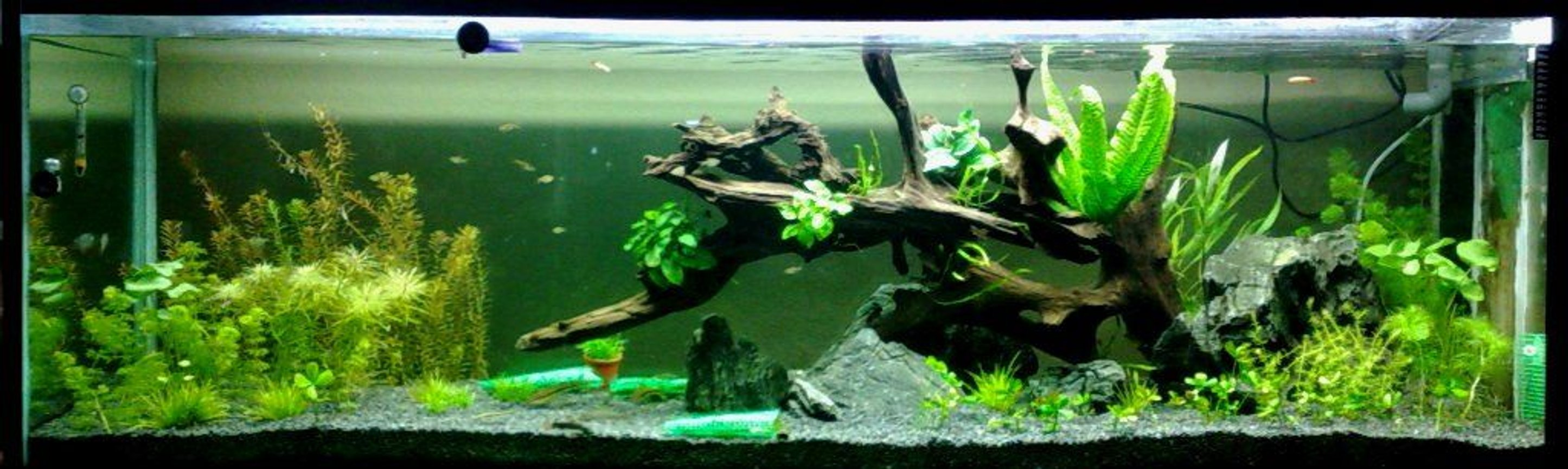164 gallons planted tank (mostly live plants and fish) - Tank under scaping .... Sept 2008